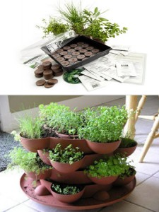 Herb Growing Kit-Baking Naturally