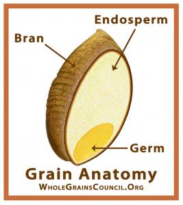 Whole Wheat v Whole Grain - interior of a wheat kernel